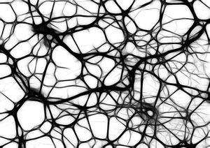 Organic-network.jpg