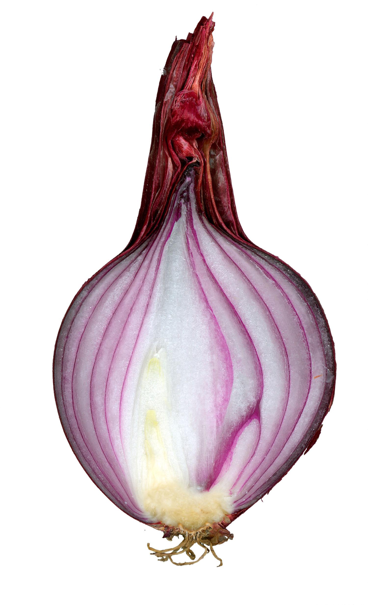 Red onion cut.jpg